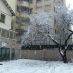 arbre nevat